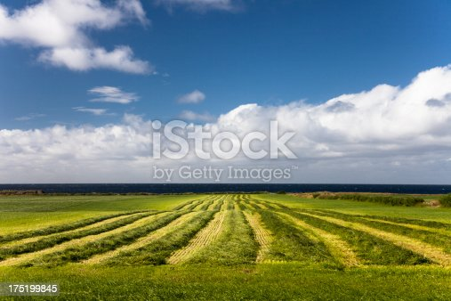 Beautiful sky and cloud over a field