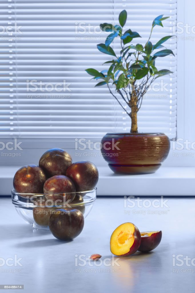 Large dark plums in a glass plate on a table and a ficus in a ceramic pot on a window sill against the background of a window with a frame from plastic and blinds стоковое фото