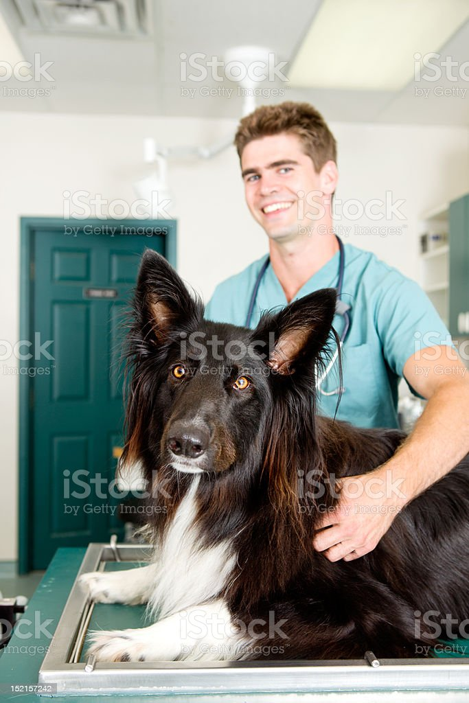 Large Dog at Small Animcal Clinic royalty-free stock photo
