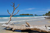 Large driftwood tree trunk on a sandy seashore with tropical island in background, Caribbean sea, Bastimentos, Bocas del Toro, Panama