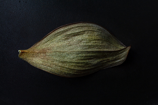 istock large dry leaf of a houseplant on a dark background 1195876296