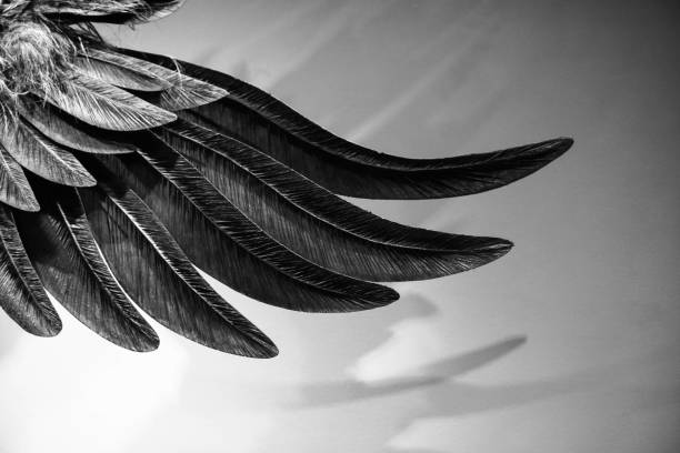 large feather wing stock photo