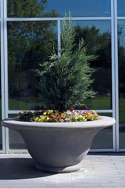 großer blume planter - blumentopf groß stock-fotos und bilder