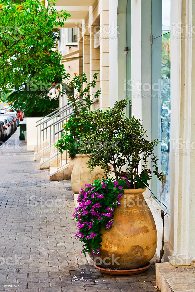 Large Flower Pots Stock Photo Download Image Now Istock