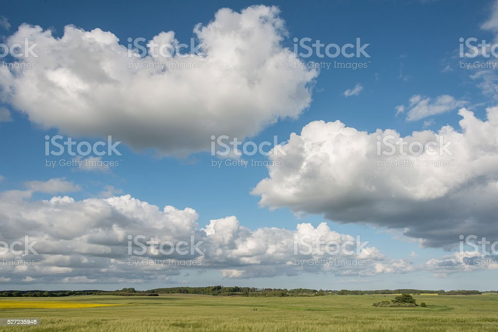 Large fluffy white cumulus cloud formations stock photo