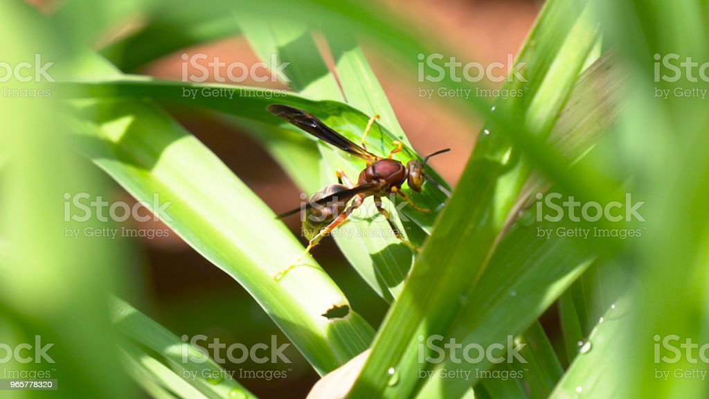 Large Flying Ant on a grass - Royalty-free Animal Stock Photo