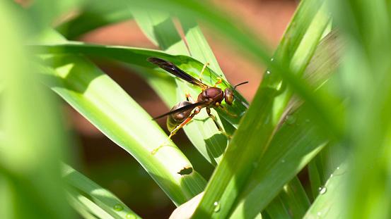 Grote Vliegen Ant Op Een Gras Stockfoto en meer beelden van Blad
