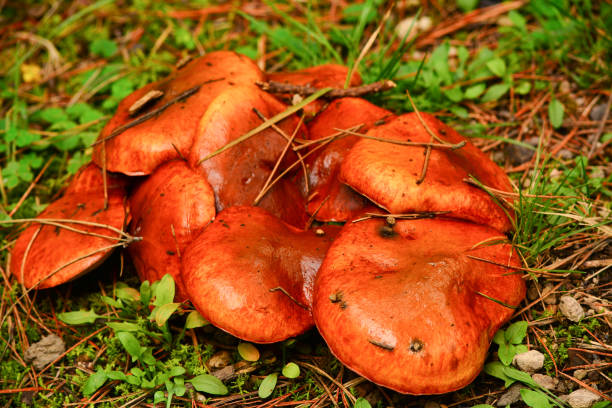 Large funghi on the forest floor stock photo