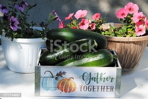 Large Garden Zucchini Gathered in a Box Next to Petunia Flowers on a Table