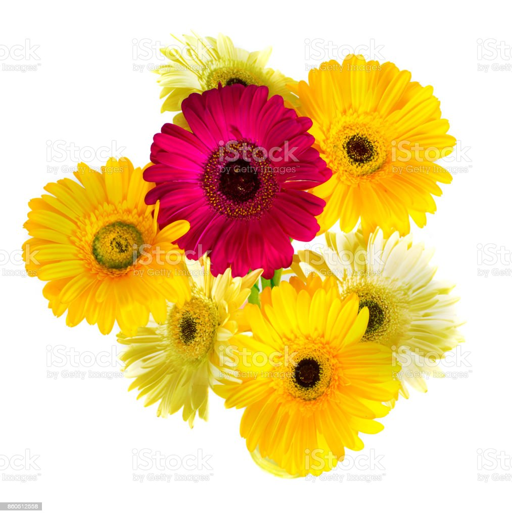 large gerbera in a bouquet on a white background. stock photo