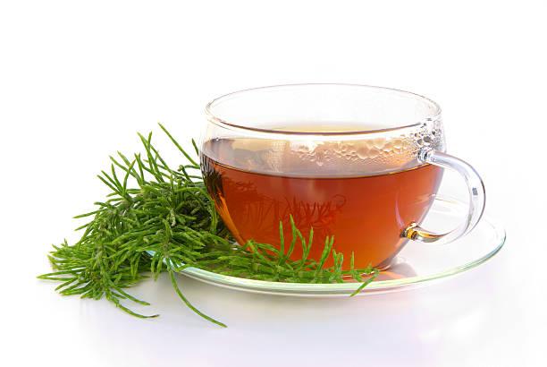 Tee Ackerschachtelhalm – Foto