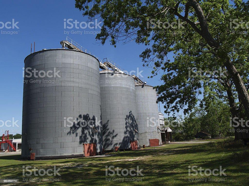 Large Grain Silos Beside a Pecan Grove royalty-free stock photo
