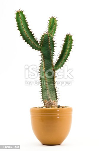 Cactus in flowerpot over white background.