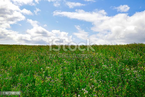 Large Green Field and Blue Cloudy Sky