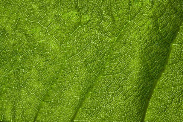 Large green leaf detail stock photo