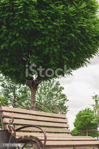 A large green tree in the park next to a wooden bench. Beautiful garden, summer landscape