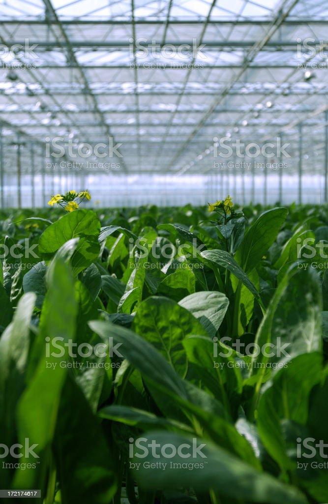 large greenhouse royalty-free stock photo