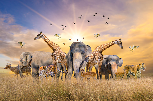 909806032 istock photo Large group of african safari animals. Wildlife conservation concept 1209602332