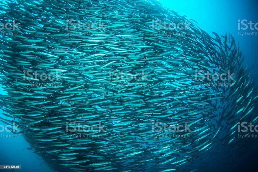 Large group of animals stock photo