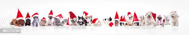 Large group of animals waring santa claus hat picture id862270780?b=1&k=6&m=862270780&s=612x612&h=sc1tltzn0gcxnmhznvjhalwosz8tj15ohvyfxltyits=
