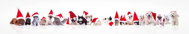 große gruppe von tieren waring weihnachtsmann mütze - katze weihnachten stock-fotos und bilder