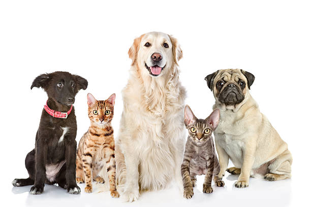 Large group of cats and dogs in front picture id542094396?b=1&k=6&m=542094396&s=612x612&w=0&h=bjlaj 0zn41um6vrzkuw4yxvbarrgc29asuprrvhdzi=