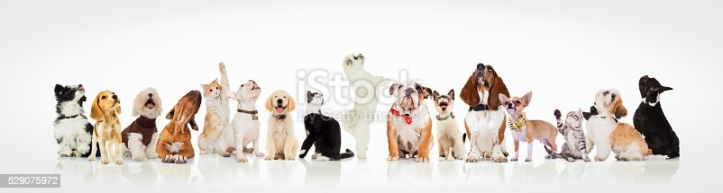 istock large group of curious dogs and cats looking up 529075972