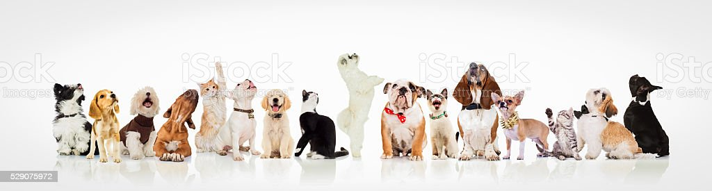 large group of curious dogs and cats looking up bildbanksfoto