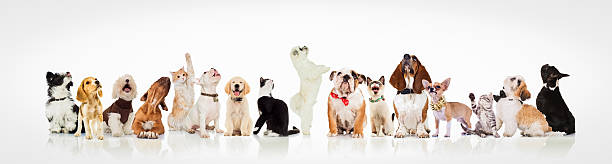 large group of curious dogs and cats looking up stock photo