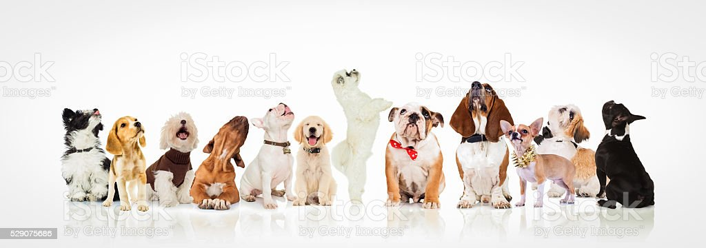 large group of curious dogs and puppies looking up stock photo