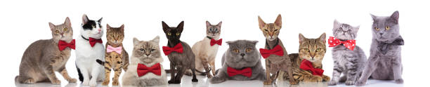 Large group of cute cats wearing colorful bowties picture id1048113284?b=1&k=6&m=1048113284&s=612x612&w=0&h=fhhzw6dr epd8v86zgqvuiat0ymfkfqc1gmmpkjrrey=