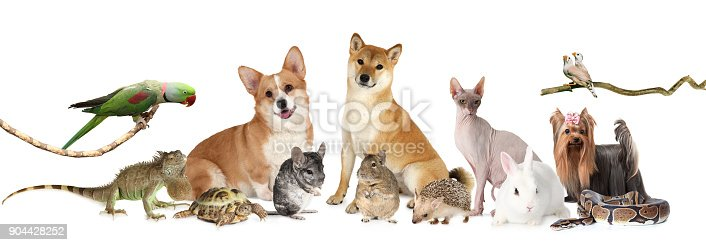 A large group of different animals isolated on white background