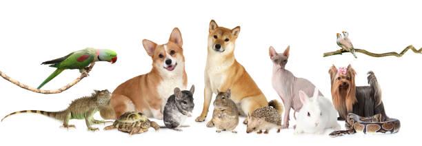 Large group of different animals picture id904428252?b=1&k=6&m=904428252&s=612x612&w=0&h=v5mzvrhfjd1hiyfr9nmnhuvovlofjck wlbjbhlfzwk=