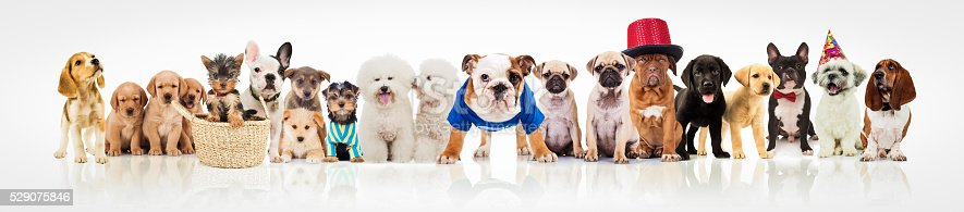 istock large group of dogs on white background 529075846