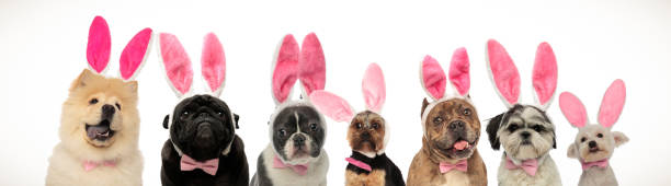 Large group of dogs wearing bunny ears for easter picture id1136538202?b=1&k=6&m=1136538202&s=612x612&w=0&h=hx5ad8x2qchwlzzmmomejjhtywpt072yxqhcxmuxply=