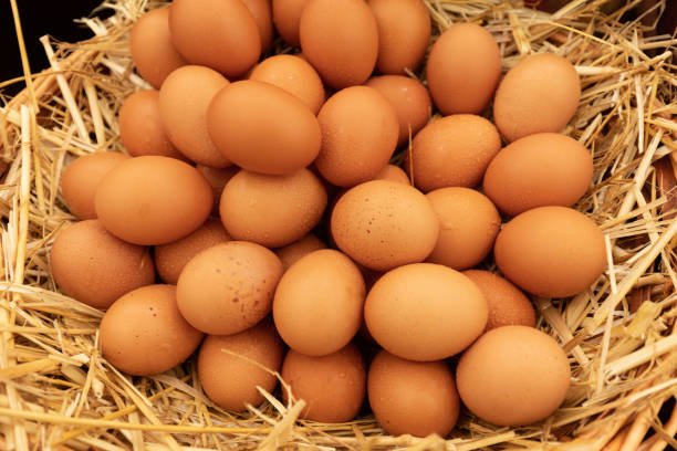 Large group of egg stacked on straw stock photo