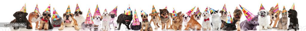 large group of happy pets wearing colorful birthday hats while...