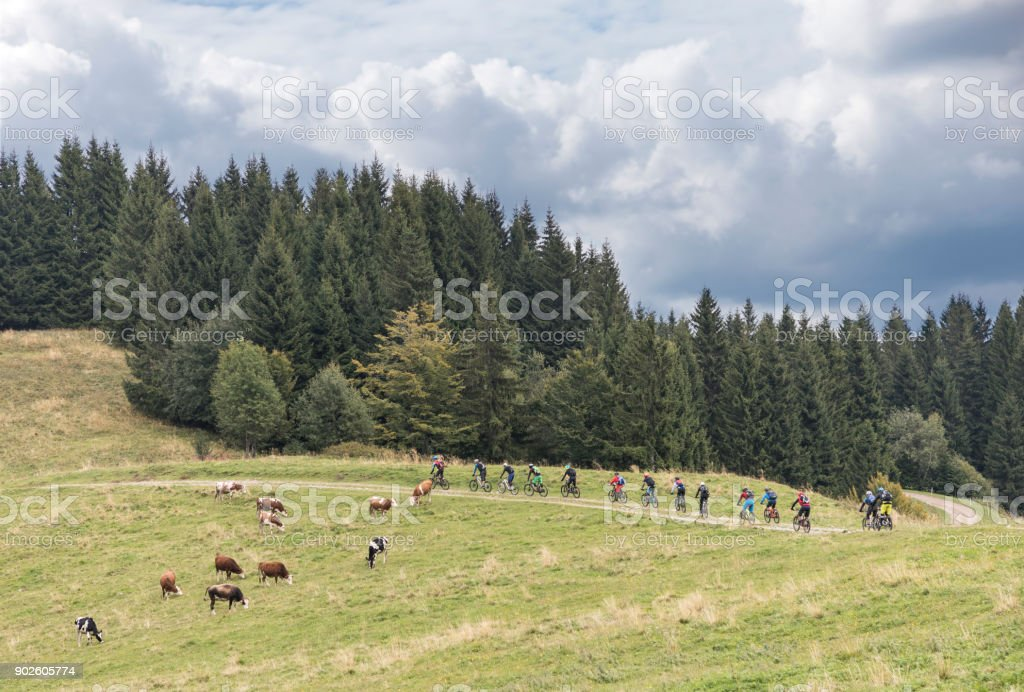 Large group of mountainbikers is crossing a pasture area in the Friulian Mountains, Italy. stock photo