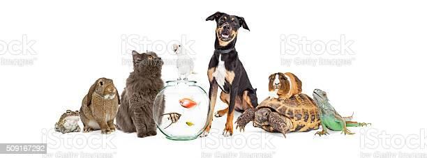 Large group of pet animals together picture id509167292?b=1&k=6&m=509167292&s=612x612&h=klip8s72j6s71hjhvvi7zcpdmnuhga6qgwhbffszg1m=