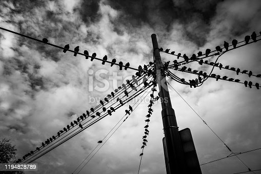 Black and white image depicting a low angle view of many pigeons sitting in a row on telephone wires outdoors in the city.