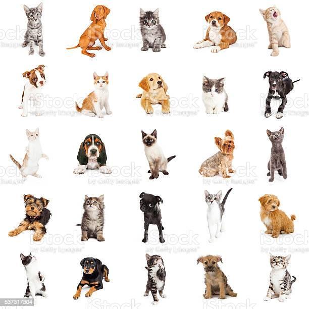 Large group of puppies and kittens picture id537317304?b=1&k=6&m=537317304&s=612x612&h=cshyfba9oqm7fj8aid92hv52cmxljbjxt0kljn4nfds=