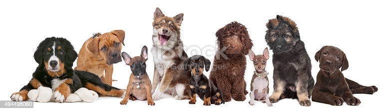 istock large group of puppies 494498060