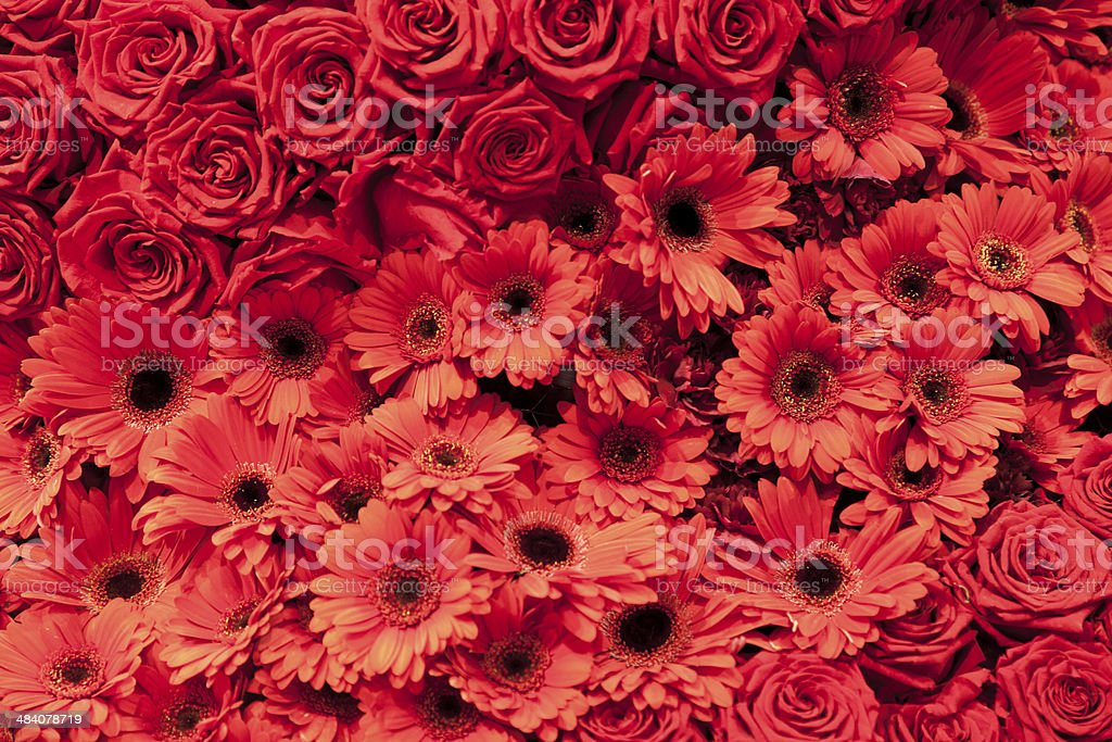 large group of red flowers royalty-free stock photo