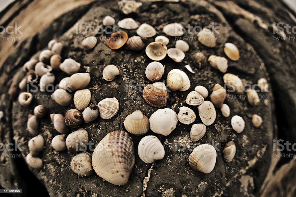 Large Group of Sea Shells on the Beach royalty-free stock photo
