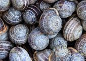 Large Group Of Snails, Full frame