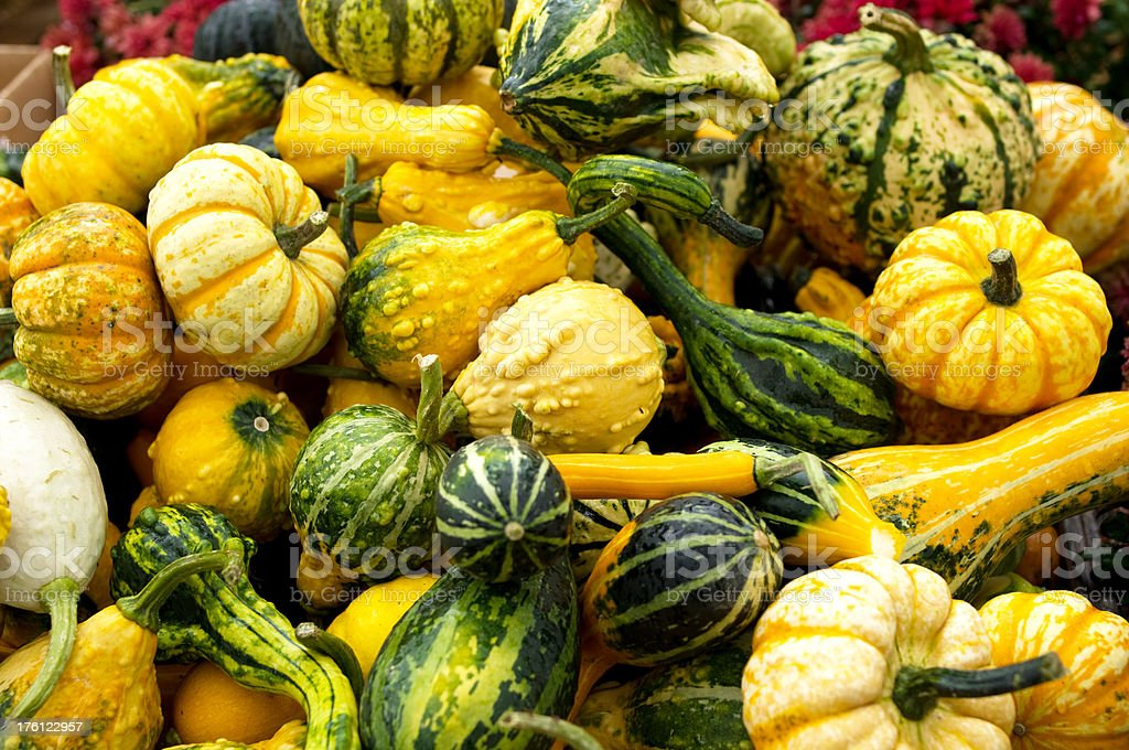 A large group of yellow and green gourds royalty-free stock photo