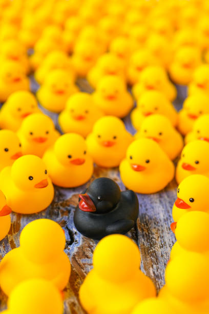 Large group of yellow rubber ducks gathering around one different black duck, on a blue coloured wooden background. - foto stock