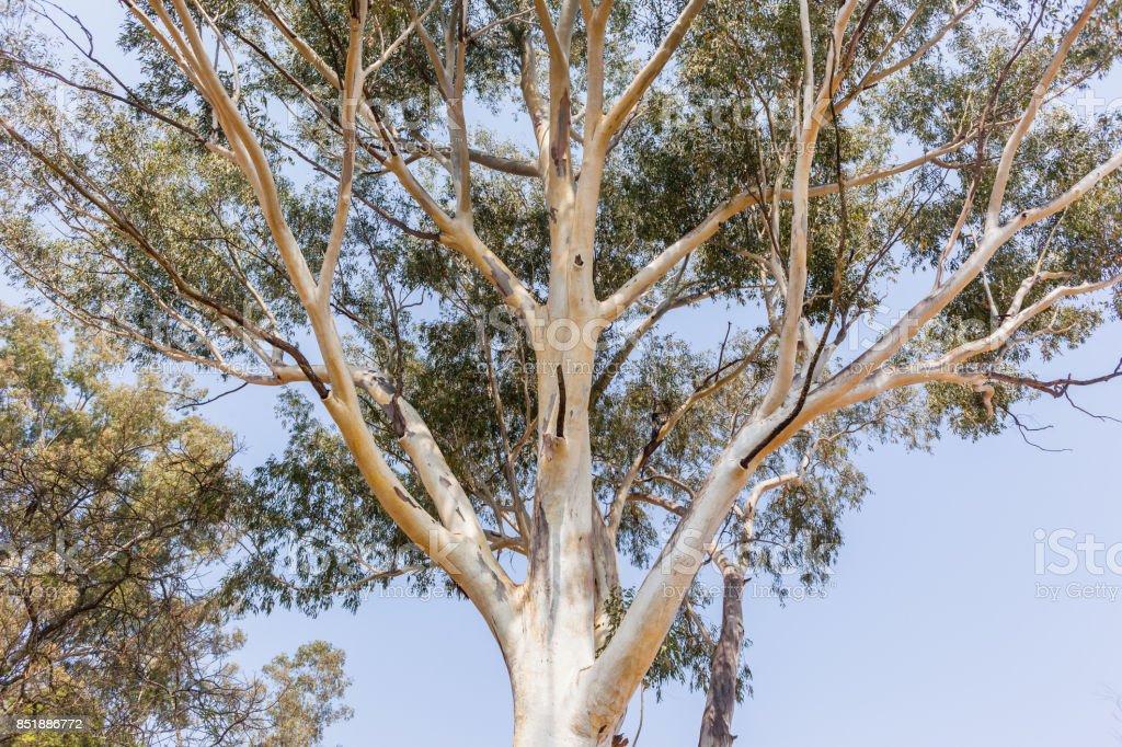 Gumtree durban datování bzučení