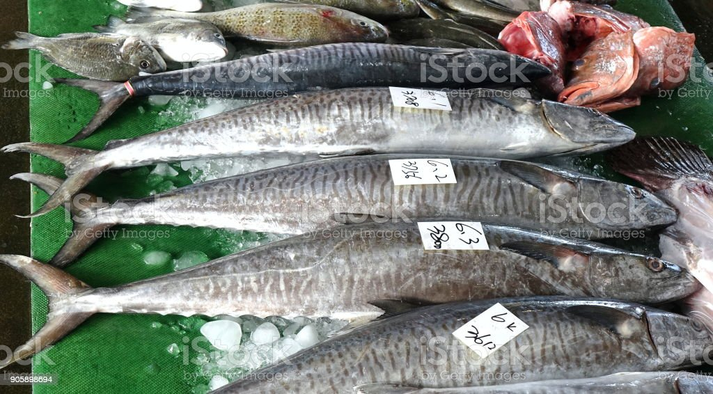 Large Indo-Pacific King Mackerels stock photo