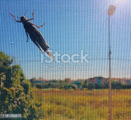 A large insect is blocked out of the window by a mosquito net.